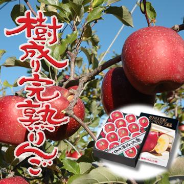 樹成り完熟りんご