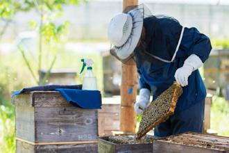 蜜蜂プロジェクト