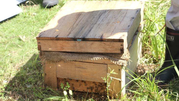 養蜂の取り組み