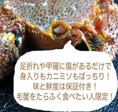 訳あり毛蟹(特大サイズ)1尾