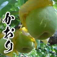 《9月上~中旬に発送》秋元さんのおいしい梨「かおり」