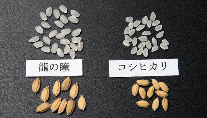 米粒の大きさ