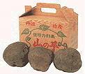 丹波特産 山の芋 秀品1kg