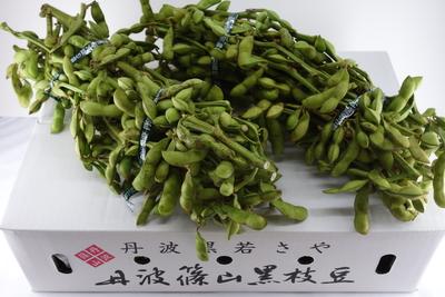 丹波篠山産 黒大豆の枝豆(枝つき) 1kg束×2束(K-2)