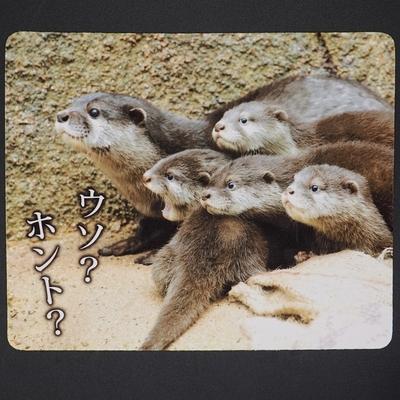 マウスパッド / ラバーマット コツメカワウソ子供 「ウソ? ホント?」 【Original】