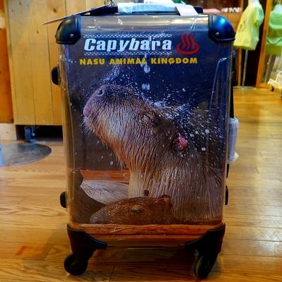 スーツケースフレーム4輪 31L 機内持込サイズ カピバラ温泉