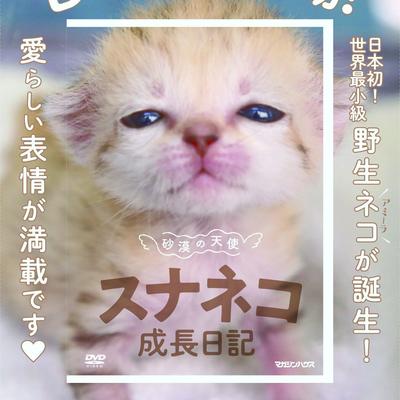 DVD 砂漠の天使 スナネコ成長日記