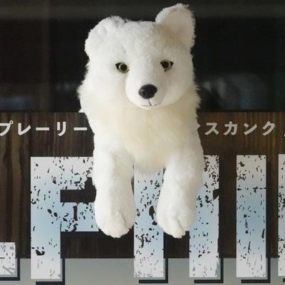 ひざおおかみ  【Original】