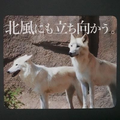 マウスパッド / ラバーマット ホッキョクオオカミ 「北風にも立ち向かう。」 【Original】