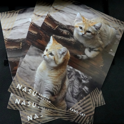 A4クリアファイル3枚set スナネコ ah2頭 【Original】4560424750760