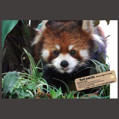 【オリジナル ポストカード】21029 レッサーパンダ 植物