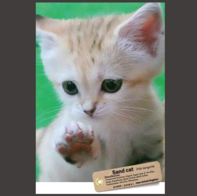 【オリジナル ポストカード】21003 スナネコ アミーラ ペッたん