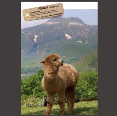 【オリジナル ポストカード】21021 アルパカ 茶臼岳