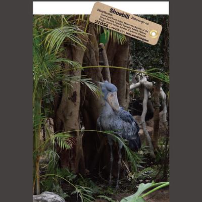 【オリジナル ポストカード】21054 ハシビロコウ ウェットランド