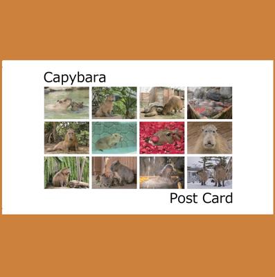 カピバラポストカード12枚セット どうぶつ王国編 【カピバラ写真家 渡辺克仁】