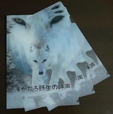 A4サイズ クリアファイル 3枚set ホッキョクオオカミ (レターパックライト発送)
