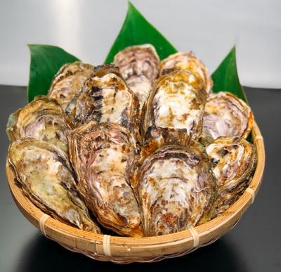 森のめぐみ 殻付き牡蛎 5Kg