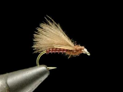 Renn Harrop CDCスペントカディス brown #16