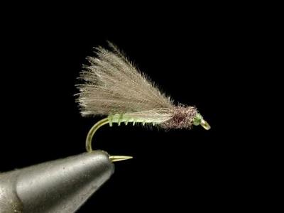 Renn Harrop CDCスペントカディス olive #16