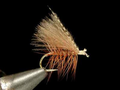 Renn Harrop パーマードカディス brown #14