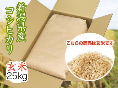 【令和2年産】コシヒカリ 玄米(25kg)