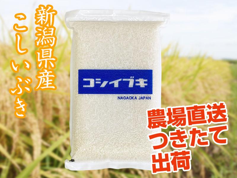 【令和2年産】こしいぶき 白米(5kg)