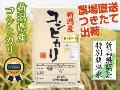 【令和3年新米】県認証コシヒカリ 白米(5kg)(9月下旬出荷開始予定)