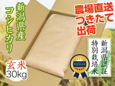 【令和3年新米】県認証コシヒカリ 玄米(30kg)(9月下旬出荷開始予定)
