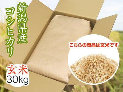 【令和3年新米】コシヒカリ 玄米(30kg)(9月下旬出荷開始予定)