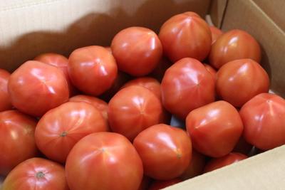【ネット限定】訳ありトマト(りんか)4kg