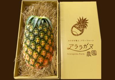 ハワイ種1玉(1.4kg~)ギフト箱