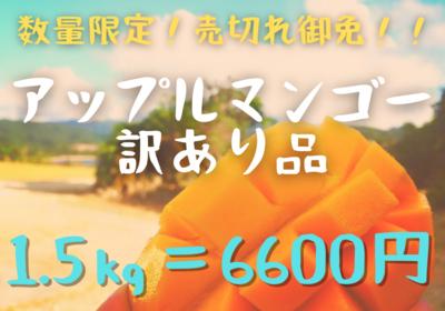 訳あり★マンゴー★