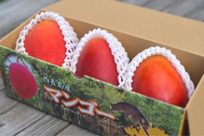 【I】アップルマンゴー1kg(2~3玉)