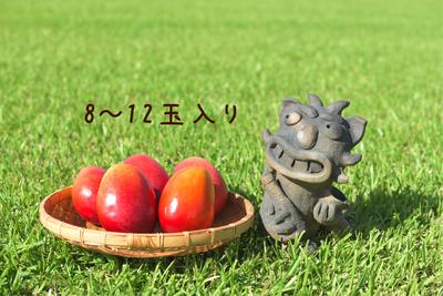 【K】アップルマンゴー4kg(8~12玉)
