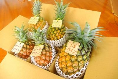 【H】パイナップル食べ比べセット約5kg(5~8玉)