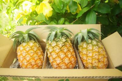 【A】ハワイパイン約4kg(3個入)