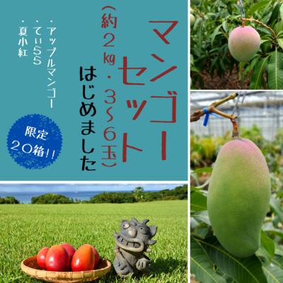 マンゴー3種セット約2kg(3~6玉)