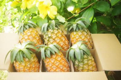 【B】ハワイパイン約7kg(6~8個入)