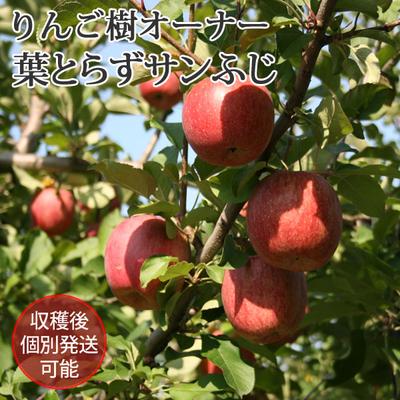 りんごの樹のオーナー【葉とらずサンふじ】