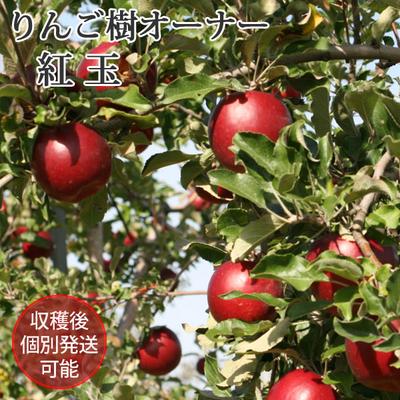 りんごの樹のオーナー【紅玉(こうぎょく)】