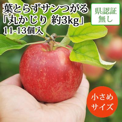 【送料無料】青森県産りんご 葉とらずサンつがる 丸かじり(小玉サイズ)  約3kg(11-13個入) 認証なし