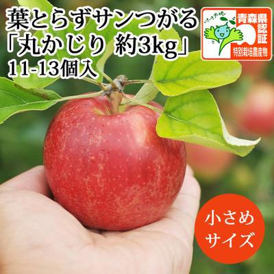 【送料無料】青森県産りんご 葉とらずサンつがる 丸かじり(小玉サイズ)  約3kg(11-13個入) 青森県特別栽培農産物認証