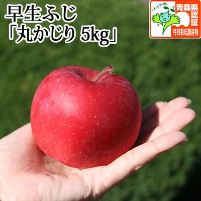 【送料無料】青森県産りんご 早生ふじ(ひろさきふじ・ほのか) 丸かじり  約5kg(20-28個入) 青森県特別栽培農産物認証あり