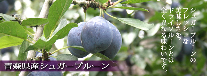 シュガープルーン 青森県産 希少品種