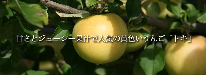 黄色いりんご「トキ」