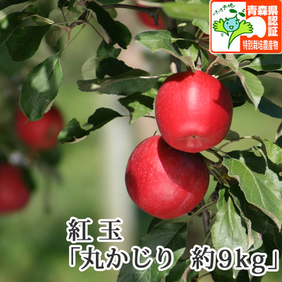 【送料無料】青森県産りんご 紅玉(こうぎょく)丸かじり(小さめサイズ)  約9kg(50-56個入) 青森県特別栽培農産物認証あり