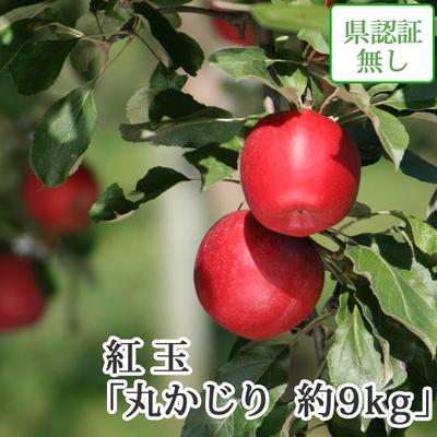 【送料無料】青森県産りんご 紅玉(こうぎょく)丸かじり(小さめサイズ)  約9kg(50-56個入) 認証なし