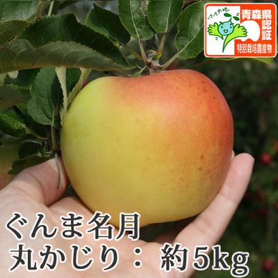 【送料無料】青森県産りんご ぐんま名月 丸かじり(小さめサイズ)  約5kg(20-28個入) 青森県特別栽培農産物認証あり