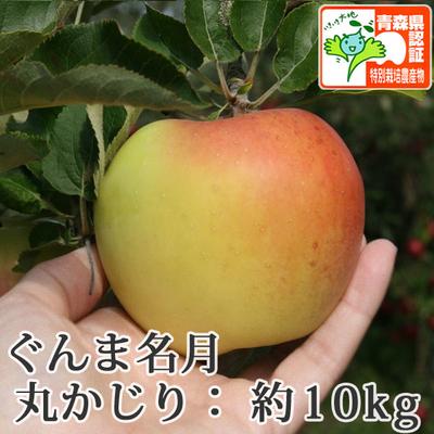 【送料無料】青森県産りんご ぐんま名月 丸かじり(小さめサイズ)  約10kg(40-56個入) 青森県特別栽培農産物認証あり