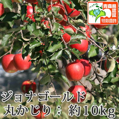【送料無料】青森県産りんご ジョナゴールド 丸かじり(小さめサイズ)  約10kg(40-56個入) 青森県特別栽培農産物認証あり